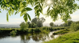 River and Water Quality for wild swimming